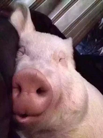 最美好的事情,莫过于每日早醒,转身看见熟睡中的你…