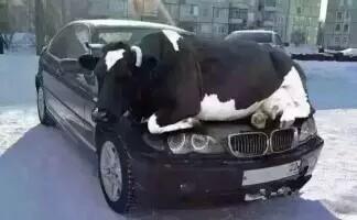 天冷了,有些小动物在车身取暖请不要赶走它,把这份爱传递下去