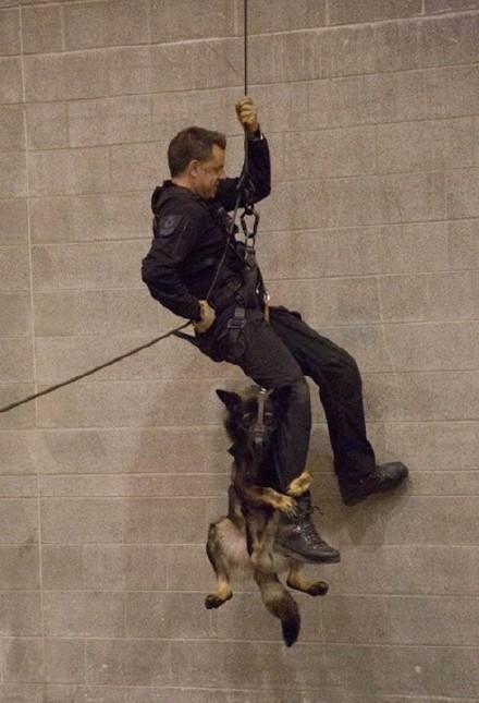 温哥华警局,一只刚开始接受训练的小警犬,抱着警察爸爸的腿,感觉好紧张