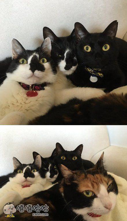 一网友说他之前留的长发,然后一次性剪掉后回家,家里的猫咪们完全就是受惊吓脸,这谁?这谁?铲屎的心碎在角落啊