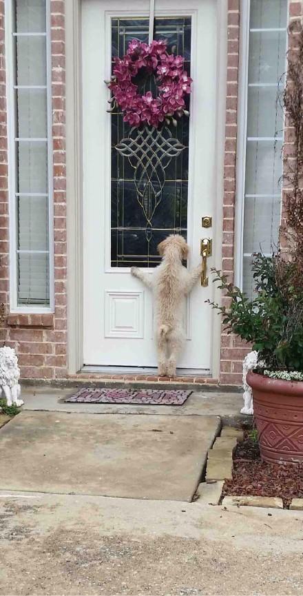 网友Cowdimples31的狗狗离家出走了,她在外找了好几个小时未果,失望的回到家时,看到了下面一幕,这货挠几下门,往屋里望一望……主人,开门吧,刚是我一时冲动,我治己肥来啦,再不走了,世界那么大,我还是想老老实实的在家看家……