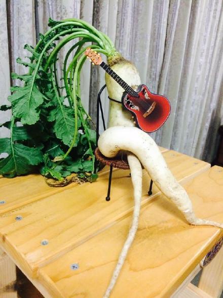 推特上一妹子今天在家后院收获了一只主音吉他手……还是个左撇子
