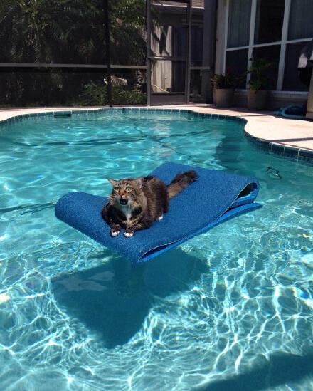 tumblr上的一位网友家的猫在泳池旁边玩,结果气垫自己飘到水池中央了,猫咪整个脸上表情立马就卧槽了哈哈哈哈
