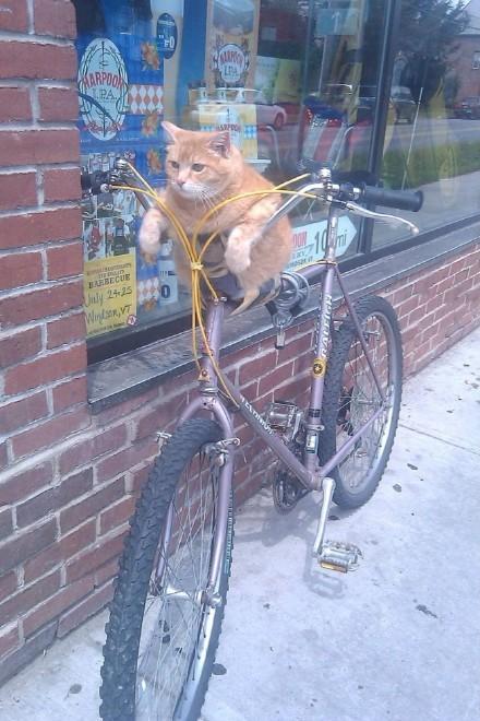 网友PlutosSelfEsteem拍到的一幕,主人应该进店买东西去了,胖子留外面看着自行车……谁要想把车推走,胖子肯定不撒爪,真把它一起带走了,看体型估计自行车卖了都不够它吃半个月的……一个让小偷望而却步的锁……