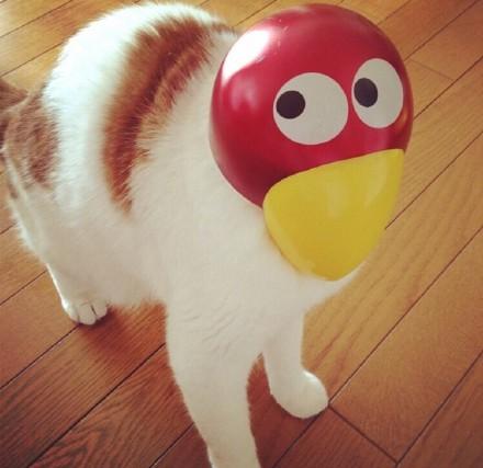 这只猫带着这个面具实在太魔性了哈哈哈