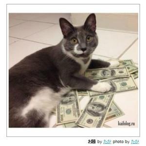 猫:你撒币啊