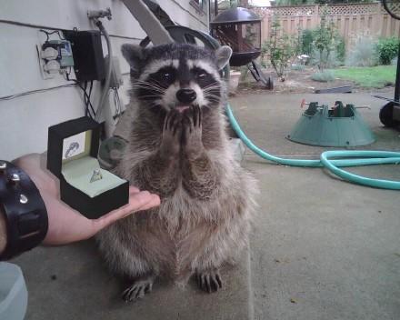 网友phidy1800把戒指递过去时,干脆面的表情。。。。我愿意!我愿意!不管你贫穷还是富有、健康还是疾病,都一辈子让你养!