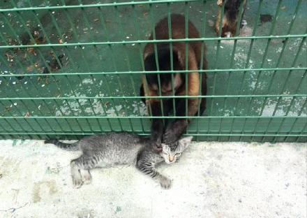 一哥们去动物园游玩,偶然看到一只野猫趴在猴山门口,让猴子隔着栅栏给他梳毛……问了一下工作人员才知,这猫咪会定期来访,每次都点一个猴子给他做造型,梳到服服帖帖才肯走……一看这派头就是办了金卡