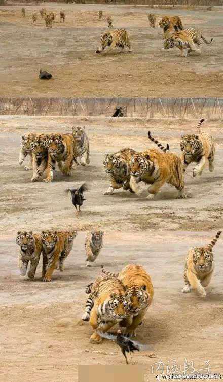 母老虎来啦