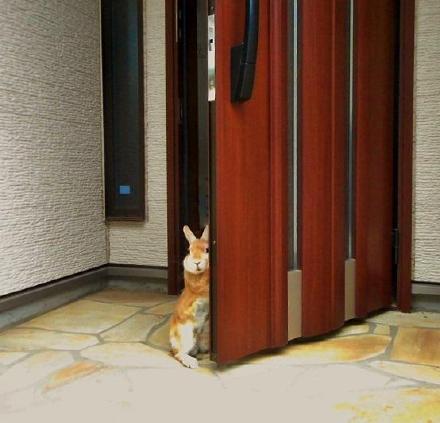 一位主人表示,每天早上他家兔子都这样追到门口,让他完全无法下决心去上班