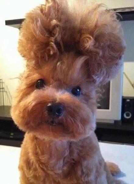 汪的发型吹好后,主人见了直想叫阿姨……感觉一眼瞅不见它就会下楼跳广场舞,帮人介绍对象……