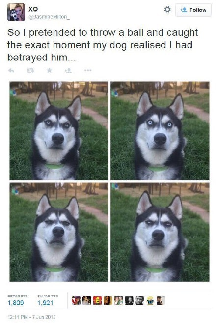 推上的这个网友,说她假装给她们家汪扔球,然后她们家汪全程表情变化4连拍如图。。内心OS:骗子!你特么在逗我?