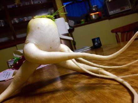 一哥们表示,家里的大萝卜拔得有点晚,已经得道成仙了