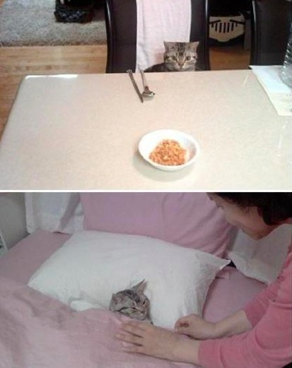 网友因为有事要出门,把猫送到了妈妈家让妈妈替自己照顾几天,然后,妈妈发来反馈照片