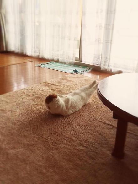岛国一妹子羞愧地表示,早上一起来,就看见自家猫咪正在刻苦地锻炼腹肌……难怪人家身材那么魔鬼