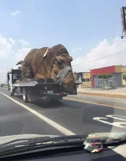 一哥们在路上开车,结果被一卡车超了,然后一看,不敢惹,背后运了一只恐龙……