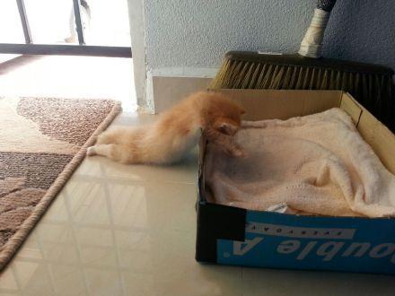 喵实在太困了...还没能够爬进窝里就这样睡着了ww...