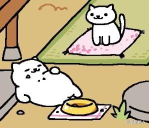 哈哈哈哈下面那只猫是不是你