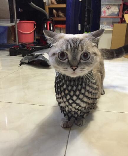 猫.....猫头鹰0w0!