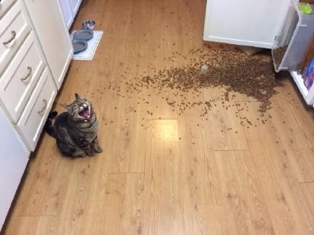 家里的熊孩子把家里柜子掏翻后猫粮撒了一地!喵星人看到后悲痛的哭出了声