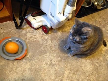 国外一个妈妈让自己的孩子去喂猫,结果孩子在盘子里放了一个橙子。。。喵星人此刻心里有千万头草泥马狂啸而过。。。