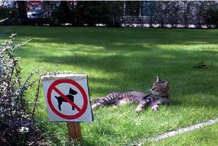 太好了,再也不用担心被蠢狗打扰了