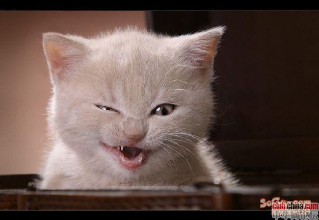 """妈淡,好久不来冷兔,都木有冷幽默细菌了。 今天看到宣传牌,五个大字,""""奶酸老海青"""",妹纸顺利念作:酸奶老海青,尼玛,这是什么东东,好高大上的样子,新牌子的酸奶么,被姐妹一顿鄙视,是青海老酸奶好么?K"""