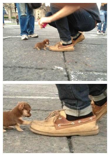 一位网友走在路上,迎面走来一只小狗,然后他就被眼前这只小小狗给壁咚了......