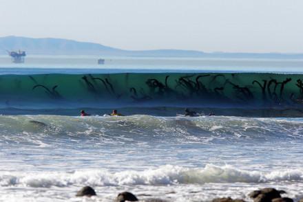 虽然是再普通不过的海草,但从这个角度看也太瘆人了,直接诱发了我的深海恐惧症……