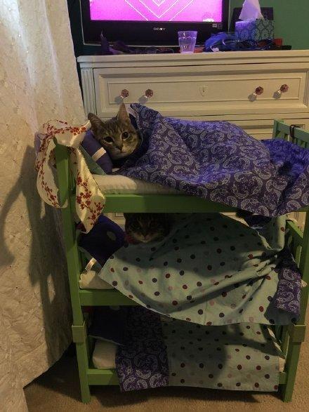 汤上有个小朋友弄了张三层睡床,供她家三只喵喵寝休之用,好有爱