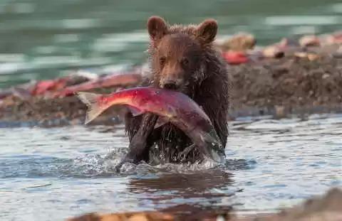 实践证明鱼和熊掌不可兼得!。。。熊迟早要吃了鱼的!!!!
