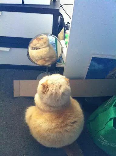 年彻过完了,这就是很多人的真实写照.一定是镜子坏掉了,一定是镜子坏掉了,一定是镜子坏掉了,嗯……肯定是镜子坏掉了……