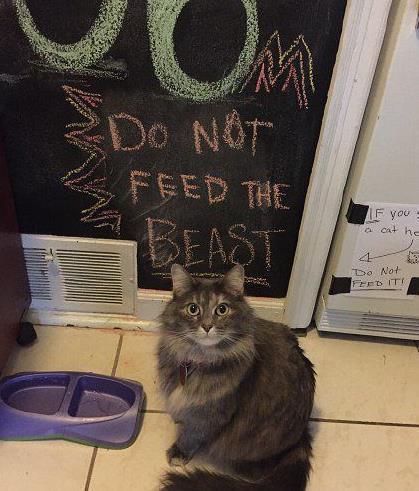 """为了不让自家的猫长胖,主人也真是够拼的。黑板上写着""""不要给这个魂淡喂吃的"""",右手墙壁上还贴着提示""""如果你看到一只猫坐在这里,千万不要喂它!""""它是一个靠卖萌骗吃骗喝的。"""