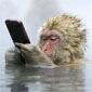 猴哥 手机好玩么呵呵