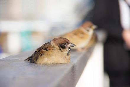 一只萌化了的雀儿。