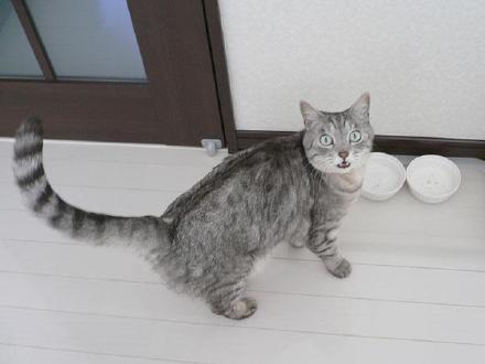 """推主kia家的猫,每次自己吭吭吭吃光猫粮之后,都露出一副""""卧槽!猫粮怎么没了!为什么!""""的惊讶颜……自己心里没数么影帝"""