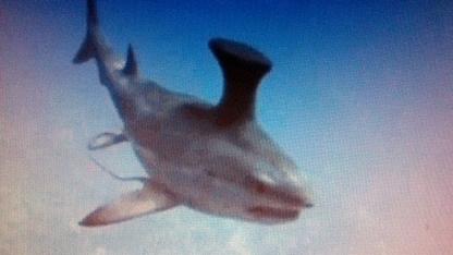 我对鲨鱼不了解,别逗我