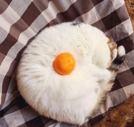 小图第一眼看上去还以为是个煎鸡蛋ww...(๑´ڡ`๑)(via 颜文字君)