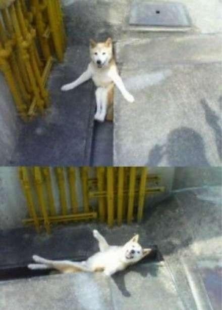 街上看到一只狗,以为它在卖萌,仔细一看原来它是被卡住啦。哈哈哈哈哈哈哈哈哈哈哈哈哈哈哈