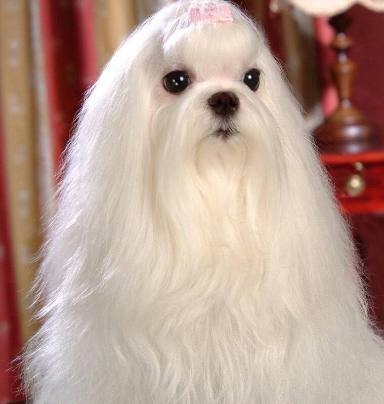 昨晚捡了一老狗...一身长毛.我是不是应该剪了它