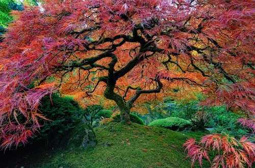 如果有来生,要做一棵树, 站成永恒。没有悲欢的姿势, 一半在尘土里安详, 一半在风里飞扬; 一半洒落荫凉, 一半沐浴阳光。 非常沉默、非常骄傲。 从不依靠、从不寻找。 ——三毛