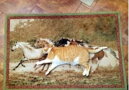 今天家里的猫不见了,我在家找喵星人找了半天,最后发现它隐藏在地毯里。