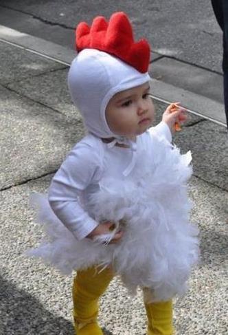 这是一只好萌的小鸡仔