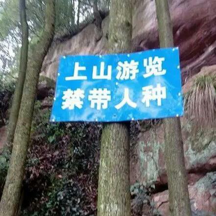 登山看到的,