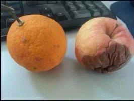 同样是放置了一个月,橙子只是开始枯萎,而苹果却已经腐烂了。所以说啊,脸皮厚对于生命的意义是非常重大的。