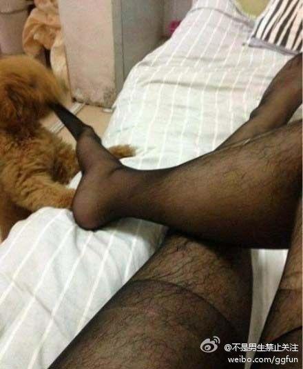 狗狗为什么要咬我的丝袜