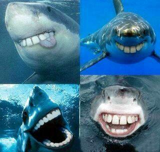 有人问为什么鲨鱼的牙都是尖的,有人答:因为如果不是尖的,鲨鱼看起来会特2b
