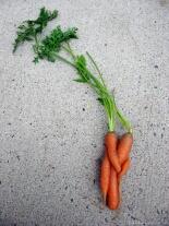 这个胡萝卜是给另一个背着么?