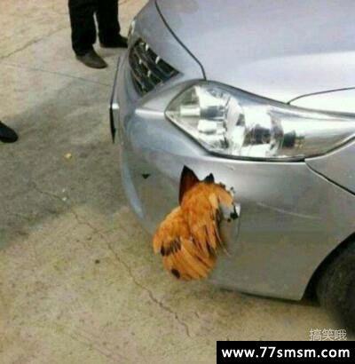 有网友爆料,在武汉动物园路十字路口发生一起严重车祸,一只公鸡冲着一辆飞驰的丰田卡罗拉轿车一头撞去,结果轿车保险杠被撞出一个大洞。。。鸡没死。。。车坏了。。。