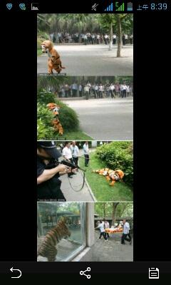 这尼玛动物园是这么教导老虎不要逃跑的…………为毛那么想笑啊……哈哈哈哈哈哈哈哈哈哈哈哈哈哈哈哈哈哈哈哈哈哈哈哈哈哈哈哈哈哈哈哈哈........